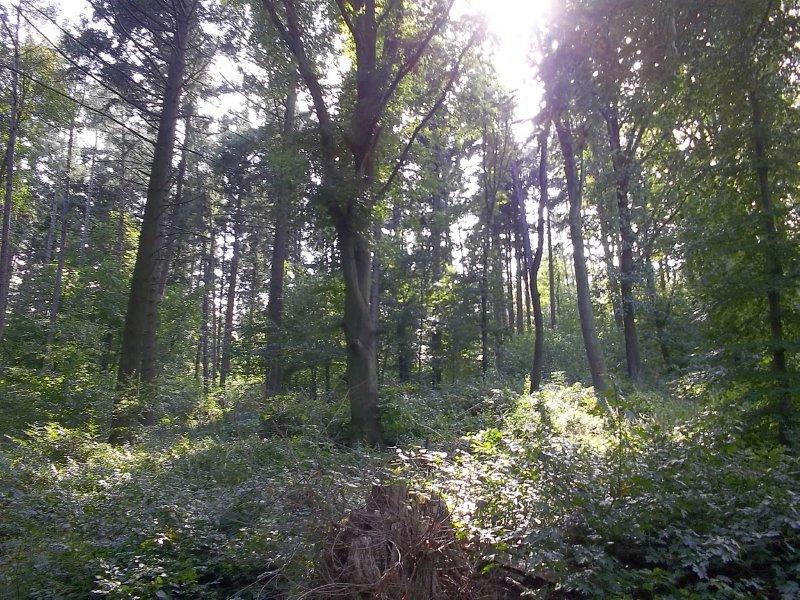 Austria_Wienerwald (Vienna Woods)