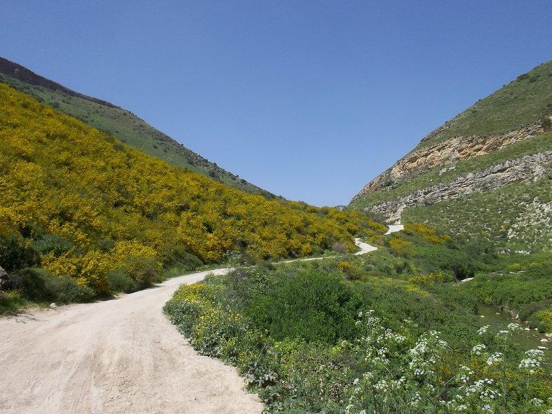 Israel_The spring in Galilee