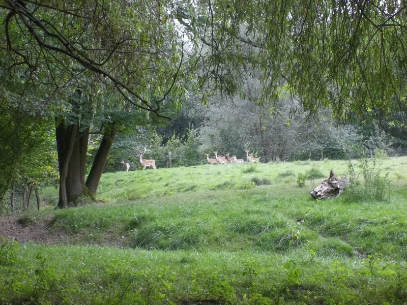 AU_ family of European deers in Porrau