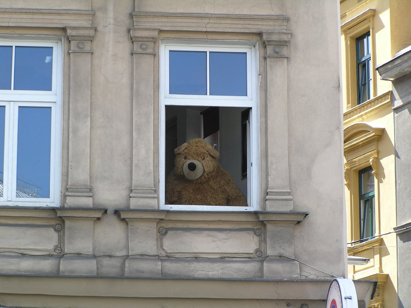 AU_the bear in window (Vienna)