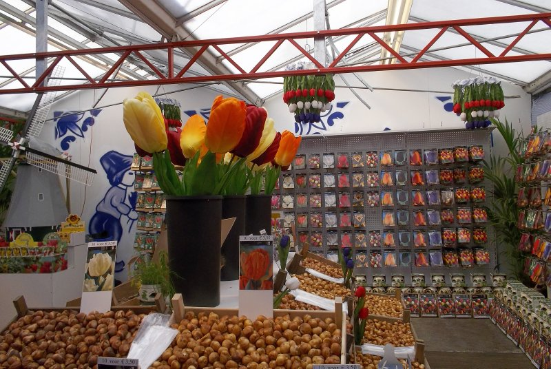 NL_Amsterdam - tulips in Flower Market
