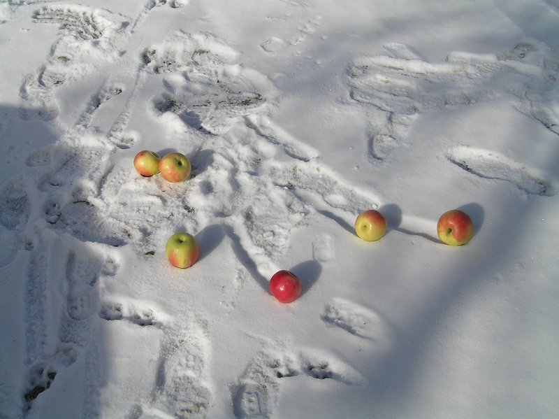 BULGARIA - Bansko - apples