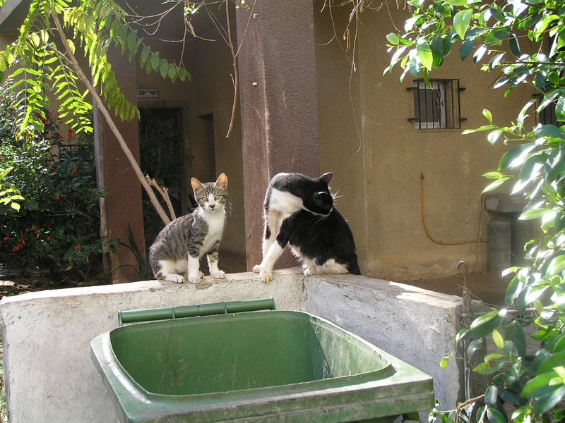 ISRAEL - Tel Aviv - cats