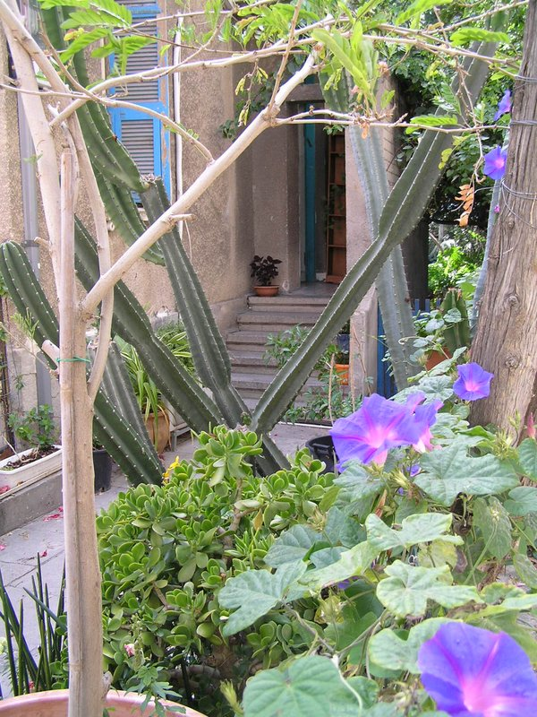 Israel - little garden in central Tel Aviv