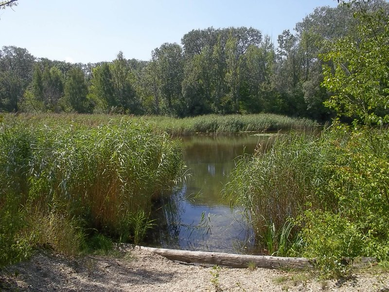 AUSTRIA_Lobau - Vienna's jungle (5)