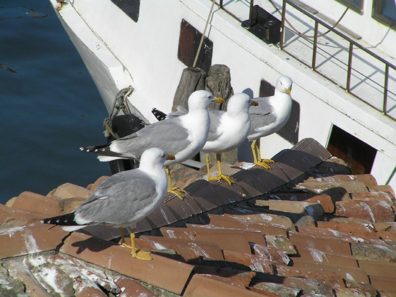 ITALY_Chioggia - meeting on the roof