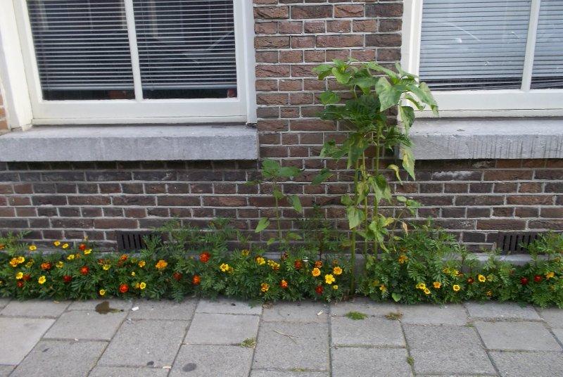NL_mini-gardens in Jordaan (Amsterdam)