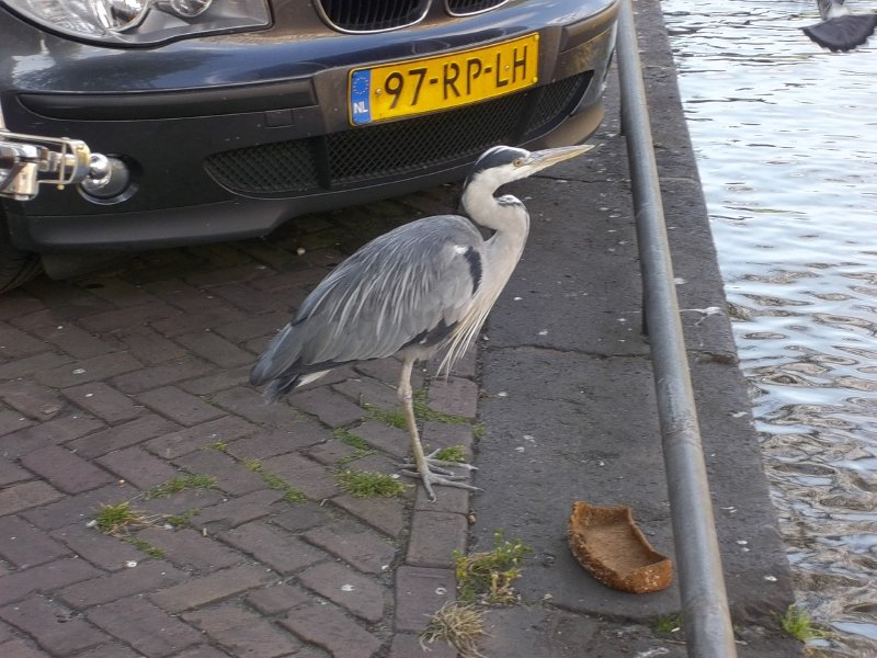 NL_bird in the city (Amsterdam)