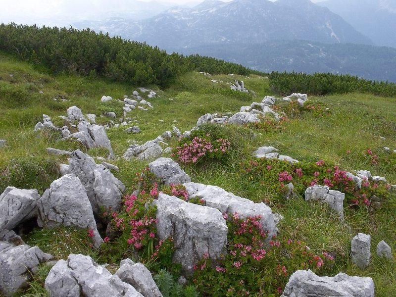 AU_Alpin view (Dachstein, Salzkammergut)