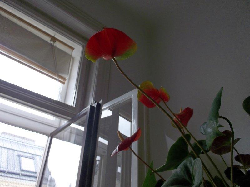 Peeping flower