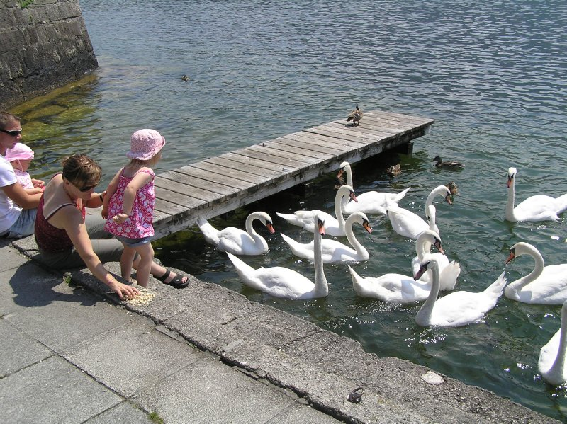 AU_swans and people (Gmunden)