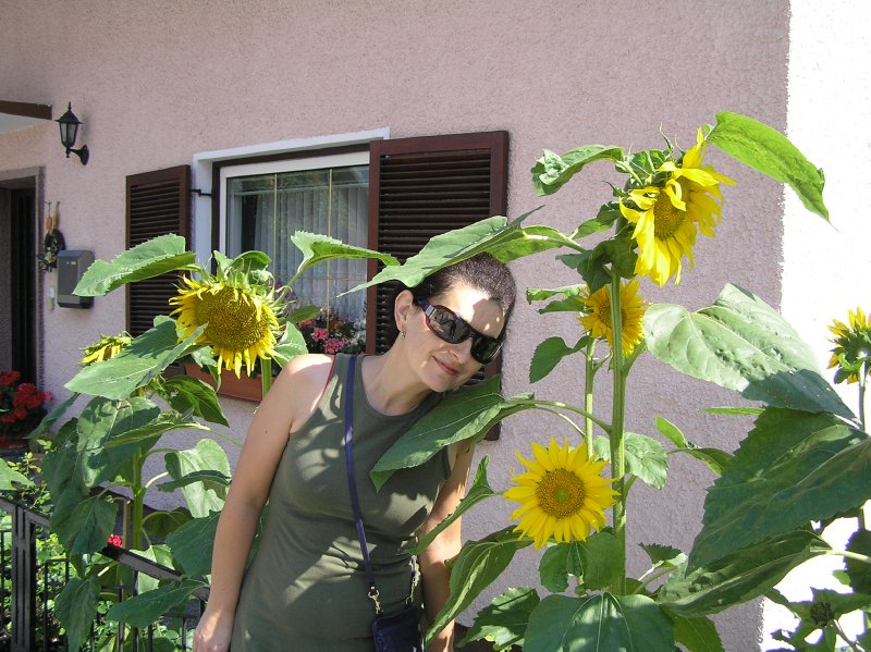 AU_sunflowers in Obertraun