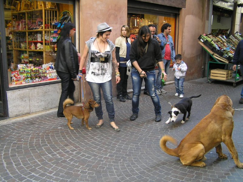 ITALY_Treviso street scene.