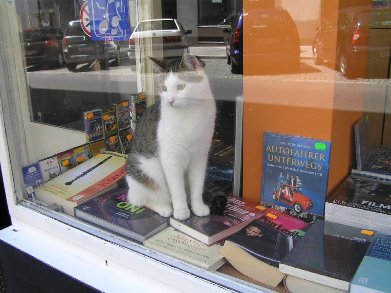 VIENNA_cat in bookstore