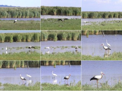 AUSTRIA_Rust - The stork and the heron