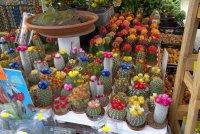 A_Flower_Market__1_.jpg