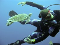 UNDERWATER_Dive with green turtle
