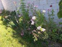 Monikas_garden__18_.jpg