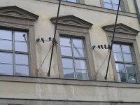 GERMANY_Munich - doves on Neuhauserstrasse