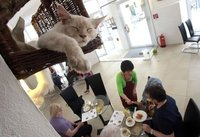 catcafe.jpg
