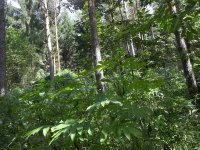 forest__21_.jpg
