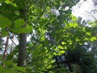 forest__22_.jpg