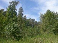 forest__5_.jpg