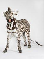 lion-zebra_mixture.jpg
