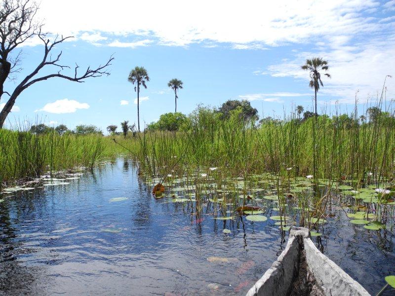Okavango Delta by marura