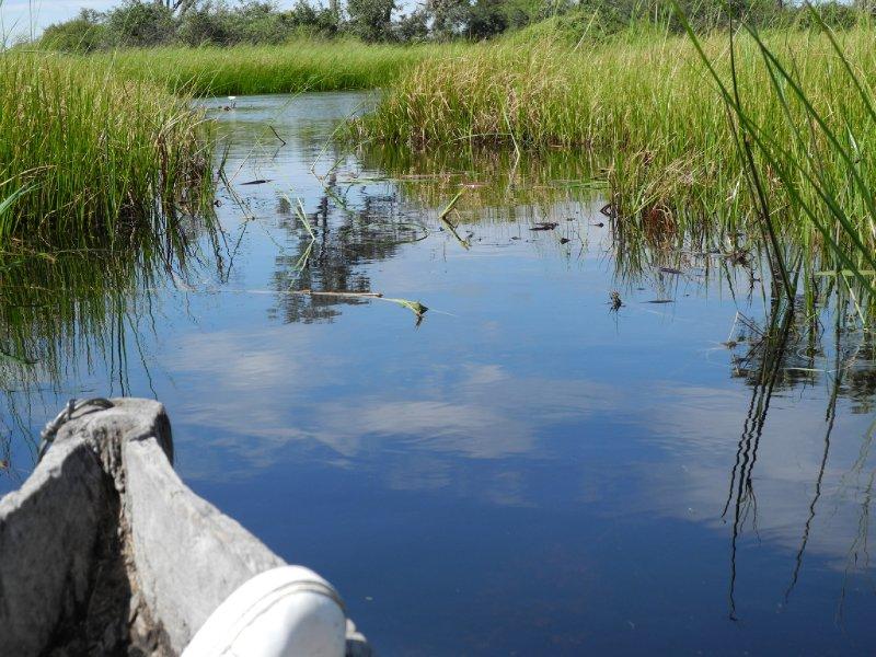 out on the Okavango Delta on a makura