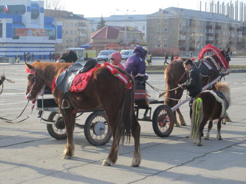 horses in yuzhno