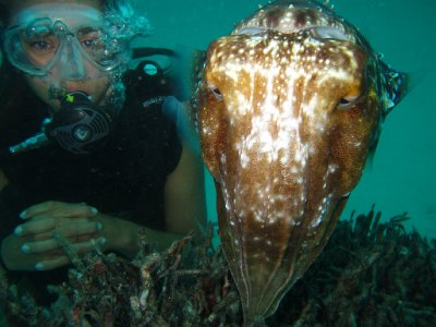 Cindy and cuttlefish in AWAS