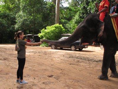 Cindy feeding taxi