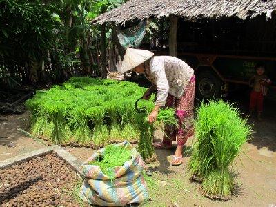 Cambodia, local woman