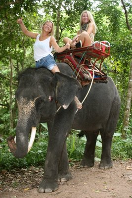 Elephant trecking in Namuang Waterfalls, Koh Samui, Thailand.