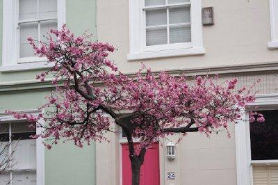 Notting_hill2.jpg