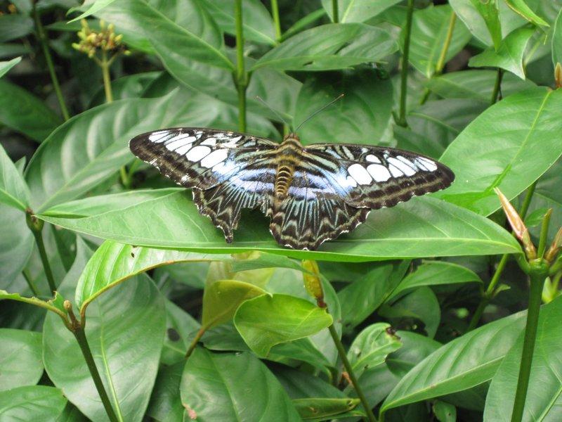 En af de smukke sommerfugle