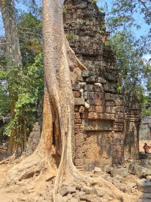 Ta Prohm III