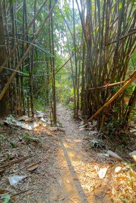 Path Through the Bamboo Jungle