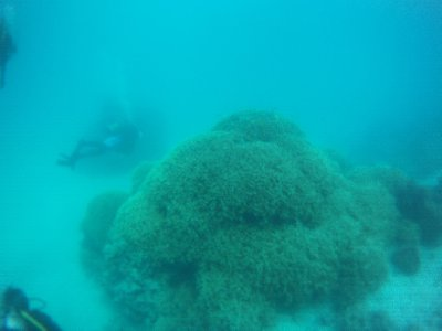 Coral in Morre Reef