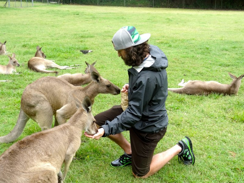 Feeding some roos