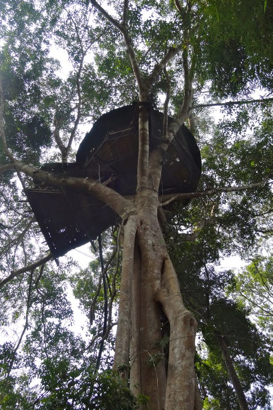 Tree House 2, from below
