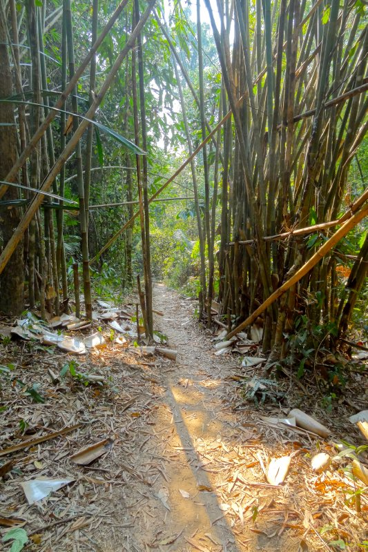 Path Through the Bamboo Jungle