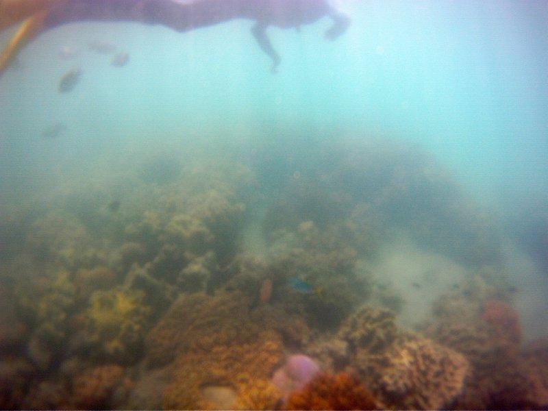 Snorkeling III