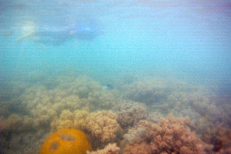 Snorkeling I