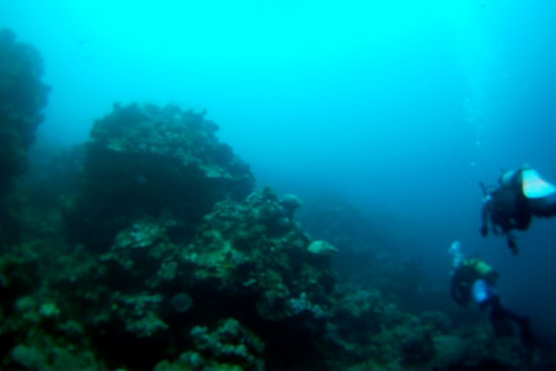 Coral Formation at Milln Reef