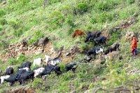 Ngorongoro cow bell