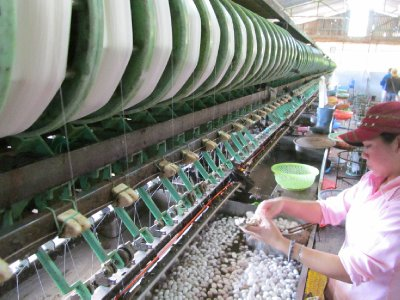 Silk Factory