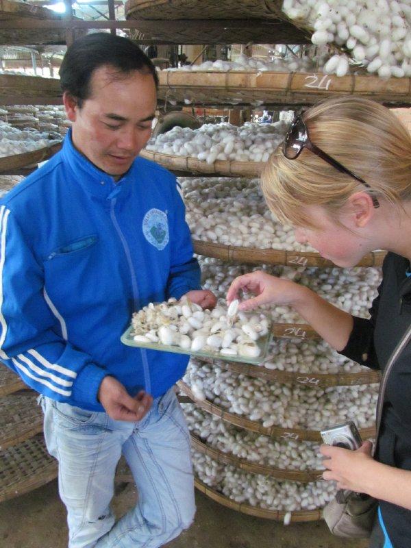 Silk Cocoons