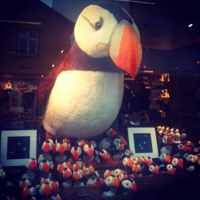 Mob_Iceland_puffins